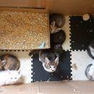 仔猫7匹全て里親様が決まりました!ありがとうございました!