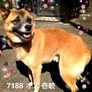 長崎~広島までの搬送をお願いします。