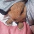 生後半年の子ウサギ