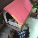 赤い犬小屋!!
