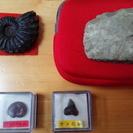 アンモナイト・サメの歯化石 やじり