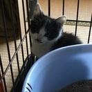 生後約5.6週間の子猫