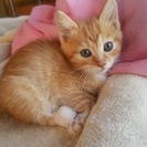 3月22日に産まれた猫です。大きくなる前に里親至急募集です