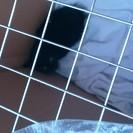 今日、子猫を保護しました。助けてください。
