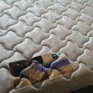 フランスベッド ダブルベッド