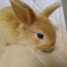 赤ちゃんウサギ、可愛がって下さる方。