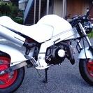 モンキー R  50cc  12V
