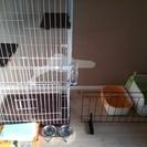 猫室内飼いセット
