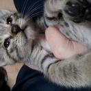 子猫10匹