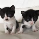 1ヶ月黒白♂と♀と母猫