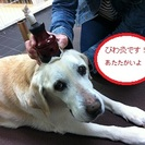 シニア犬介護のプロフェッショナルです! 若いワンちゃんも大歓迎♪
