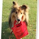 犬とオーナーのためのお店~DOG LIFE PLUS~ 出張しつけ...