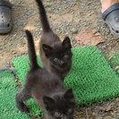 子猫3匹、里親募集