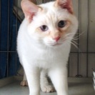 猫白血病のクリスちゃん。今はゲージの中でいつもひとりぼっちです。一...