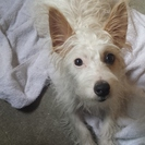 迷い犬です、里親を探しています。