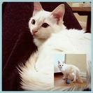 ノラ猫さんが生んだ美猫しーくん