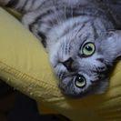 7歳サバトラのメス猫です。最期まで幸せになってほしいと願っています。