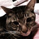 苦労してきた可愛い猫ちゃんの暖かいご家族募集!2