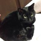 苦労してきた可愛い猫ちゃんの暖かいご家族募集!4