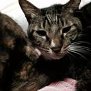 苦労してきた可愛い猫ちゃんの暖かいご家族募集です!5