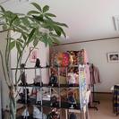 【長野駅徒歩5分】癒しの空間を提供する占いのお店です。