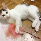 斬新な前髪の3か月の雄の仔猫