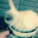 ミニウサギの赤ちゃん6羽里親さん募集
