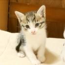 2ヶ月になる子猫が2匹。里親さん探しています。