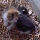 三毛と白黒の2匹です。