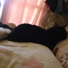 猫好きさん集まれ(=^x^=)動物好きさん募集