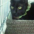 甘えん坊すぎる黒猫の男の子