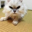 あと数日 期限今月末 兵庫近郊 猫の一時預かり&里親募集