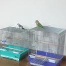 文鳥とサクラインコ
