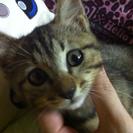 人懐こい可愛い子猫です