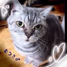 【終了】成猫♂6歳 睦月(むつき)の里親さん募集中