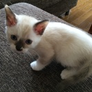(=´ᆺ`=)子猫の里親探しています(=´ᆺ`=)
