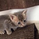 ひらパー沿いの道で母猫とはぐれた野良ちゃんです。