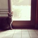 兵庫県(尼崎):生後4ヶ月 野良子猫 里親募集