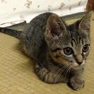 里親募集 三ヶ月くらいのオスの子猫 人懐っこく可愛い子です