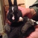 子ウサギもらってください