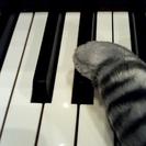 《四條畷市》大人の歌とピアノのレッスン