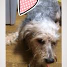 mix犬オス1歳