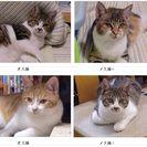 兵庫県尼崎市武庫之荘 かわいい子猫の里親になって下さい