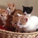 愛らしい子猫ちゃんたちの里親募集