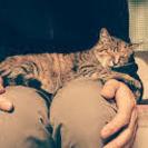人懐こい愛らしい女の子ネコです。
