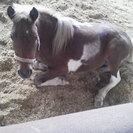 馬の世話をしてくれるボランティア募集しています。