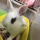 かわいい子ウサギ!!!!