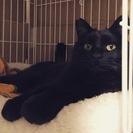 黒猫「オグ」とってものんきな性格です。