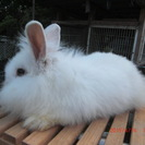 アメファジとミニウサギのMIX。