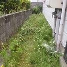 草取り・剪定などの庭仕事でお困りの方、お問合せください!!